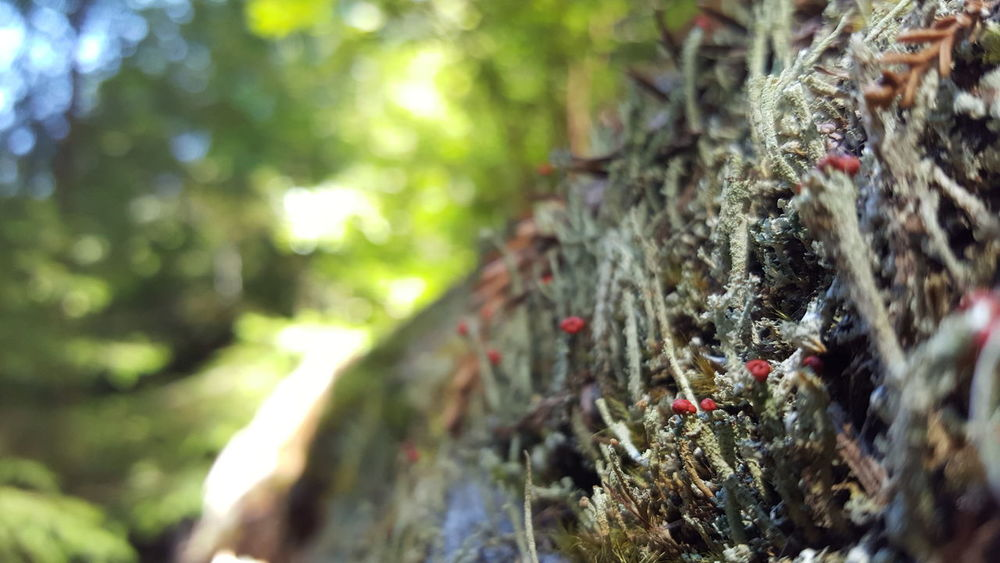 Tree Trunk Tree Growth Close-up Moss Selective Focus Nature Bark Plant Focus On Foreground Branch Day Tranquility Scenics Beauty In Nature Green Color Outdoors Multi Colored Non-urban Scene Tranquil Scene