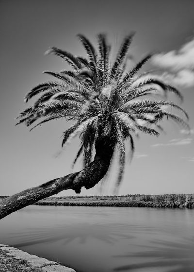 Bulow Creek State Park Art Photo Beauty In Nature Bulow Creek Cloud - Sky Day Film Look Film Lovers Florida Life Inspiration Lakeshore Longexposure Motion Photography Nature No People Outdoors Palm Reflection Sky Tranquil Scene Tree Vacation