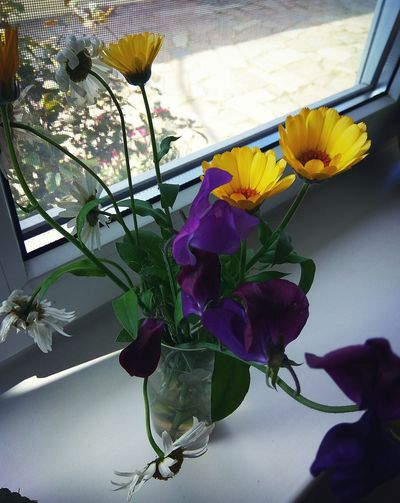 Flower Fragility Nature Purple Growth Beauty In Nature Plant No People Day Close-up Indoors  Flower Head Freshness Water High Angle View Blooming Flowers Bloom Nature Beauty In Nature Blooming Flower Multi Colored Bouquet Botany