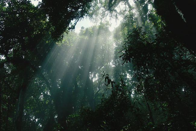 Trees And Sky Travel Photography Chiangmai,Thailand Hello World