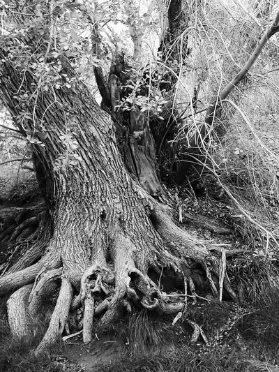 My love of trees Photos Around You Trees Summerlin Calico Basin Nature Photography Enjoying Life Lasvegasnevada