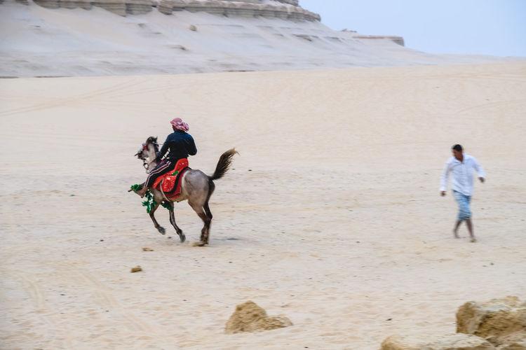 Man riding arabian horse on desert