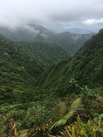 Dominica Beauty In Nature Day Fog Forest Green Color Growth High Angle View Landscape Lush Foliage Mountain Mountain Range Nature No People Outdoors Plant Scenics Sky Tranquil Scene Tranquility Tree
