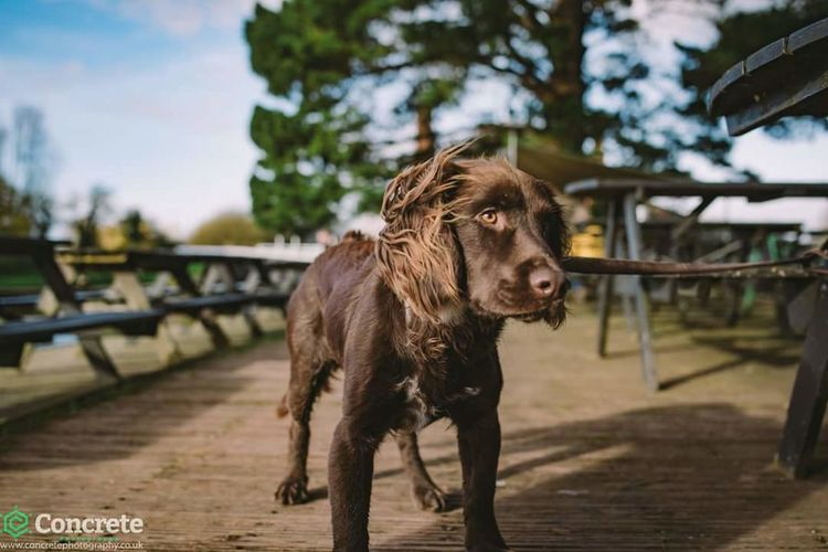 Buck 29.12.15 Concretephotography Devon THESE Are My Friends Portrait Color Portrait Dogstagram Dog Cockerspaniel Cockerspanielworld Doublelocks Winterwalk