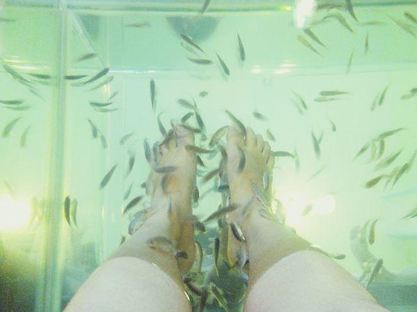 :) Relaxing Spa Cute Fish Spa