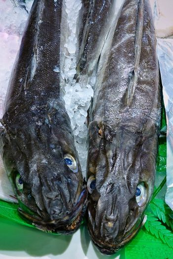 Fish Animal Seafood Food Food And Drink Freshness Raw Food Market Healthy Eating Wellbeing For Sale Ice Close-up High Angle View Animal Themes Cold Temperature Fish Market Retail Display Fishing Industry Retail  Sale