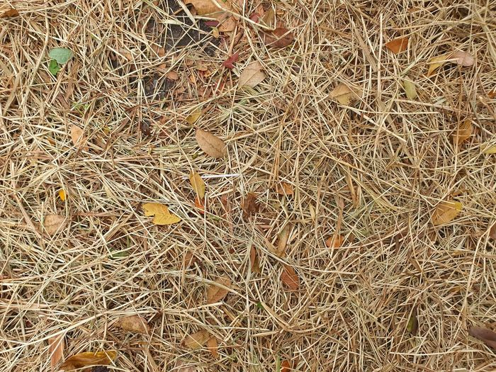 Full frame shot of twigs on field