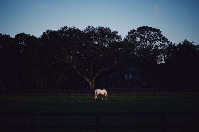 The Great Outdoors - 2017 EyeEm Awards Horse Sunset