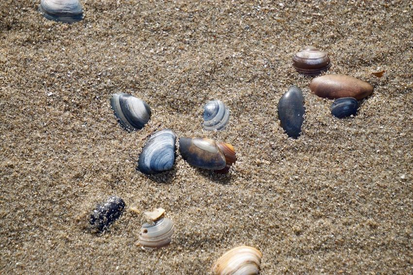 Sand Land Beach High Angle View Sunlight Nature Animal Wildlife Close-up Animals In The Wild Animal Themes Animal Shell No People Outdoors Pattern Day Shell Animal Seashell Textured  Beauty In Nature