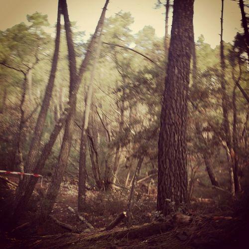 Trail Ocres et Limons - Mormoiron Trailrunning Trail Running Running