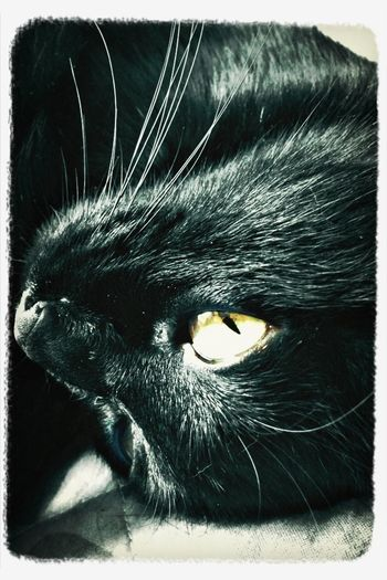 Black&Green Cats Eyes