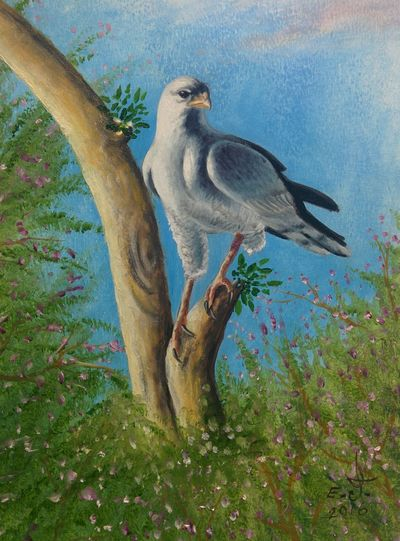 "The pale chanting Goshawk one of the most extraordinary birds of pray you could see them only in subSaharan Africa,a very rear bird the only way you and I can help them is to leave them be and let them leave their own lives ,thank you.oil on canvas,24""_30. Animal Themes Bird Bird Of Pray Animals In The Wild Animal Wildlife Goshawk. Nature ArtWork Oil Painting Drawing Art, Drawing, Creativity Fine Art My Art Colllection Fredom My Best Friends ❤ Tranquility Friendship. ♡   Love ♥ Koi."