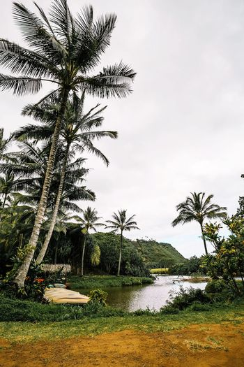 Waimea Kauai Kauai Hawaii Waimea Hawaii Hawaiian Village Garden Park Palm Trees Plant Water Tree Sky Nature Beauty In Nature No People Growth Day Grass Tranquility Outdoors Scenics - Nature Cloud - Sky Tranquil Scene