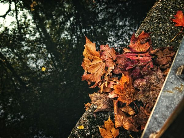 Die Blätter fallen... Capture The Moment Autumn Colors From My Point Of View Fresh 3 Urban Landscape Hanging Out Urban Perspectives Check This Out The Devil's In The Detail Taking Photos