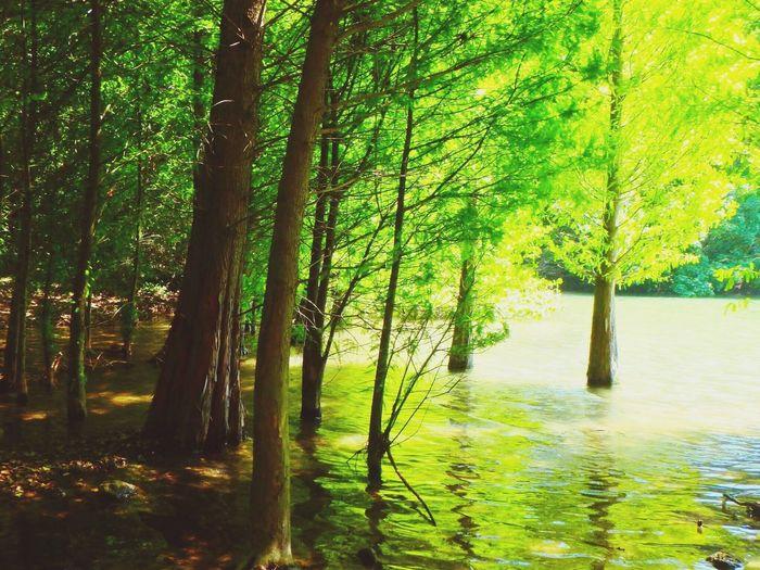 Tree Nature Beauty In Nature River Outdoors Day Scenery Japan Fukuoka