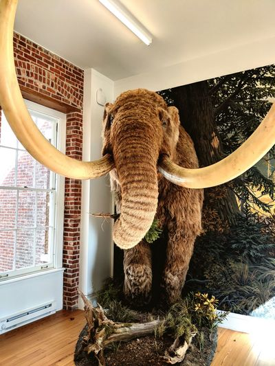 Mammoth Animal Museum Exhibition Staten Island EyeEm Selects Child Curtain Window