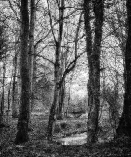 WelwynGardenCity Commonswood Woodland Walks Walking Around Black & White HDR Early Morning Forest Photography