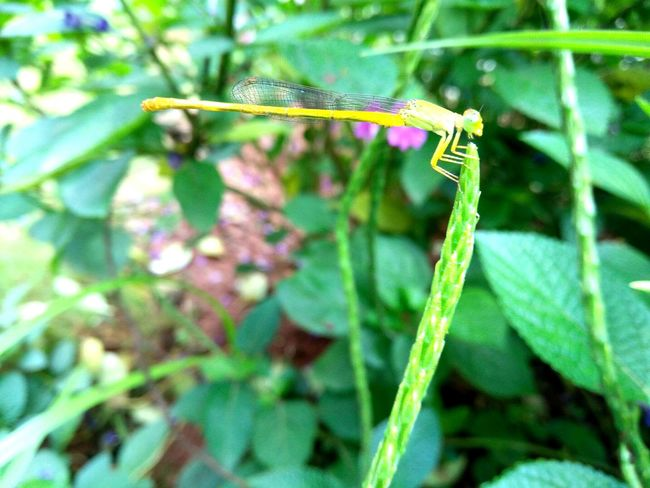 The Color Of School One Animal Leaf Close-up Animal Themes Plant Green Color Nature Zoology Beauty In Nature Green Outdoors Day Blade Of Grass Botany Babydragonfly