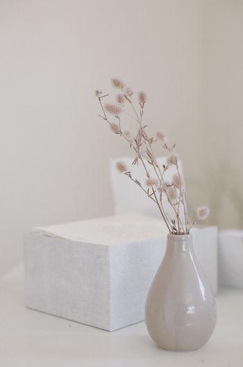 Adorn Decor Desk Desktop Millennial Pink Pink Vase Decorate Decoration Dry Flowers Flower Paper
