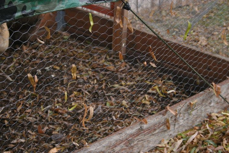 Side of the chicken coop Outdoors