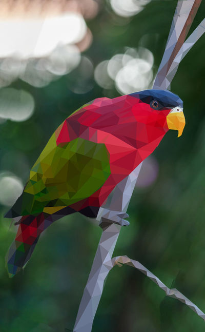 Colorful parakeet with yellow beak sitting on a branch in low poly style Animal Animal Representation Animal Themes Beauty In Nature Bird Close-up Day Flying Focus On Foreground Low Poly Art Low Poly Design Multi Colored Nature No People One Animal Outdoors Plant Red Representation Toy Vertebrate Water