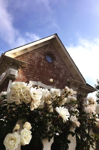 From here I see Classic Views Picket Fence Skyline Old House Brick Building Roses Historical Eyeemphoto