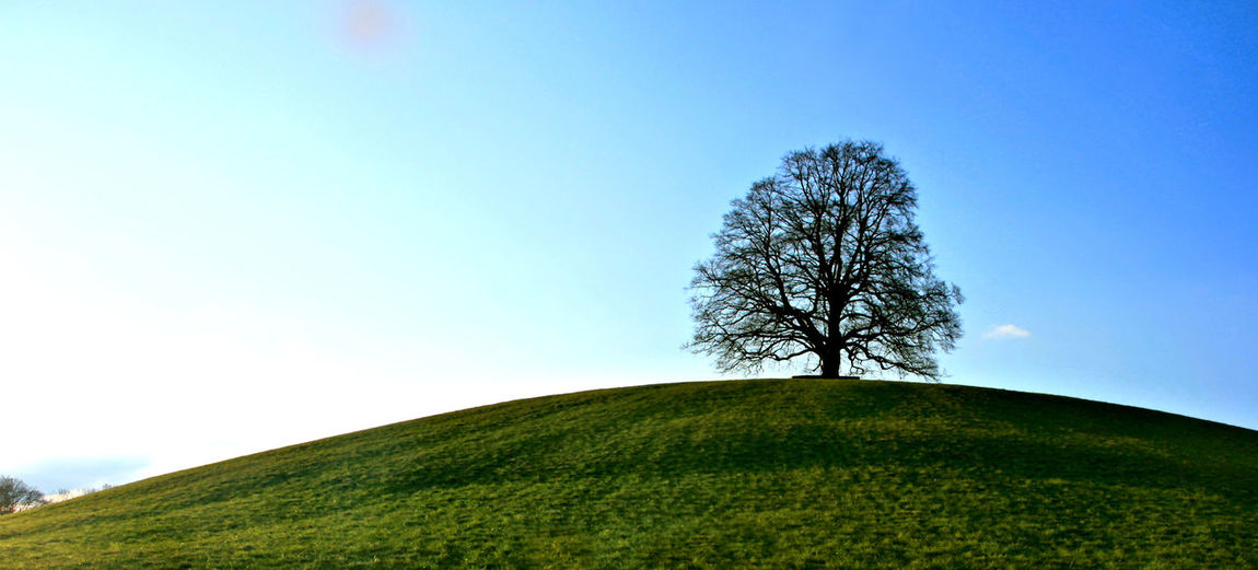 Tree on hill against clear sky