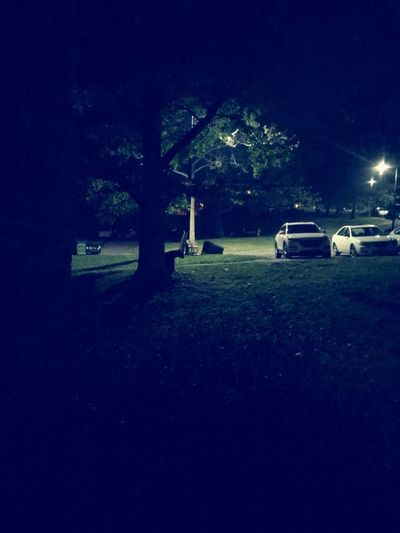 Bear by the tree Bear And Tree Bear Cub Mode Of Transportation Night Transportation Motor Vehicle Car Illuminated Land Vehicle Tree Plant Nature No People City Dark Sky Street Park Architecture Outdoors Grass Bench Adventures In The City