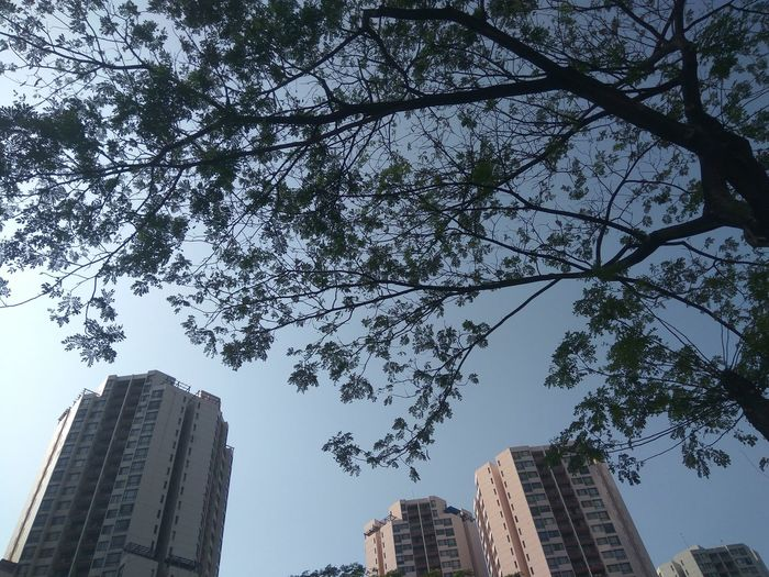 Low angle view of tree and buildings against sky