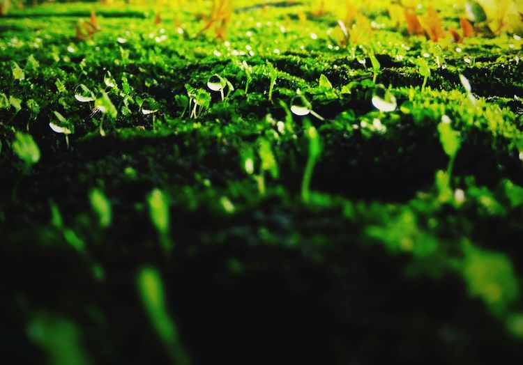 Nature Grass Leaf Moss Beauty In Nature No People Growth Day Close-up Outdoors Freshness Fragility Backgrounds EyeEm Best Shots Leisure Activity EyeEm Best Edits First Eyeem Photo High Angle View Rain Drops Rainy Days Nature Illuminated Scenics Full Frame Rock - Object