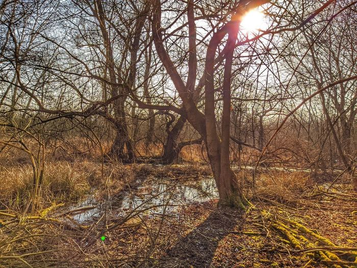 Bare trees in forest against bright sun