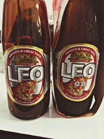 Tiger Cat Leo Beer