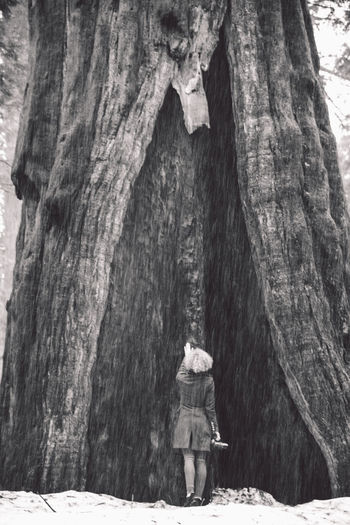 Rear view of woman standing against tree trunk at sequoia national park