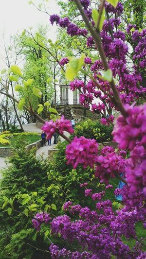 Park Flowers Purple Green