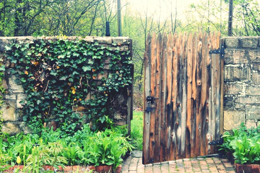Gate Ivy Ivy Leaves Ivywall Stone Wall Garden Gate Secret Garden Forgotten Garden walled garden Walled Garden