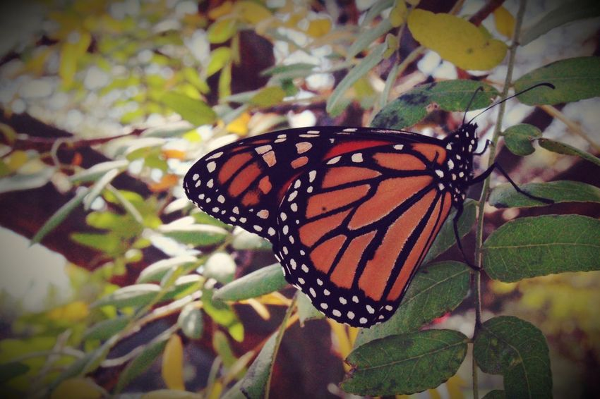 Butterfly - Insect Insect Animal Themes Leaf Butterfly Animals In The Wild Nature One Animal Plant Close-up Animal Markings No People Fragility Freshness Growth Beauty In Nature Day Outdoors