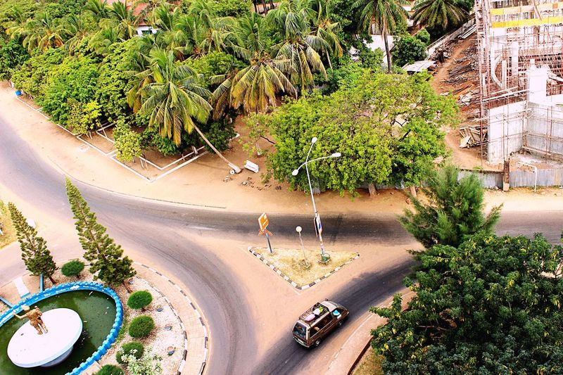 Finding New Frontiers Palm Tree Africa Car Road Colour Birdseyeview