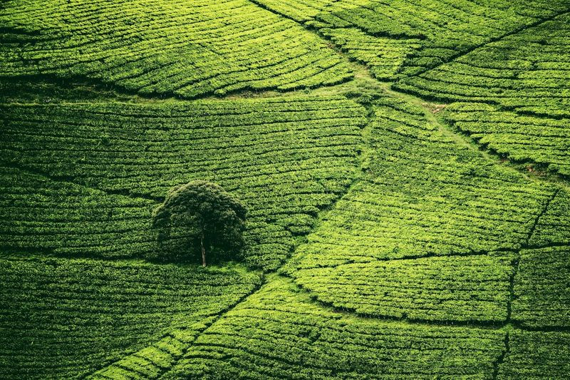 Hidupku Selalu Sepi Pangalengan Bandung INDONESIA Geonusantara Landscape Green Color Full Frame Backgrounds Plant Nature High Angle View EyeEmNewHere Grass No People Day Pattern Field Growth Beauty In Nature Land Sunlight Outdoors Close-up Landscape Textured  Focus On Shadow