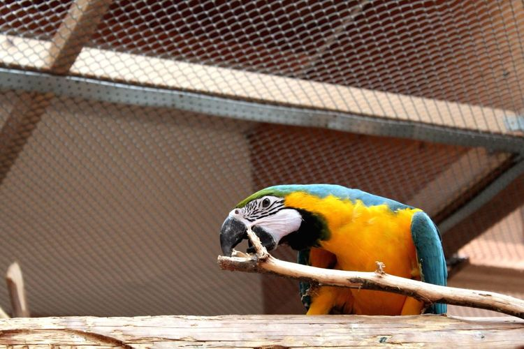 Close-up of parrot perching on metal in cage