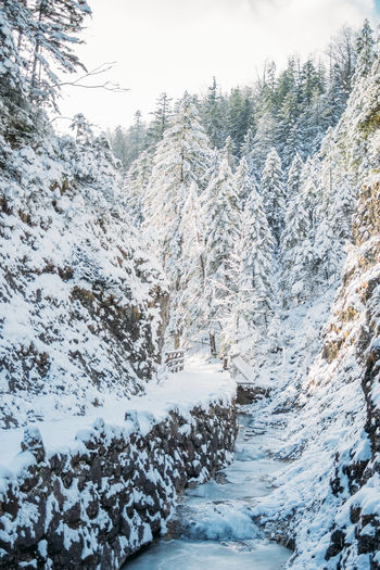 Winter Cold Temperature Snow Nature Tranquility Day Outdoors Covering Forest Hill Hiking Bridge Tatry Poland