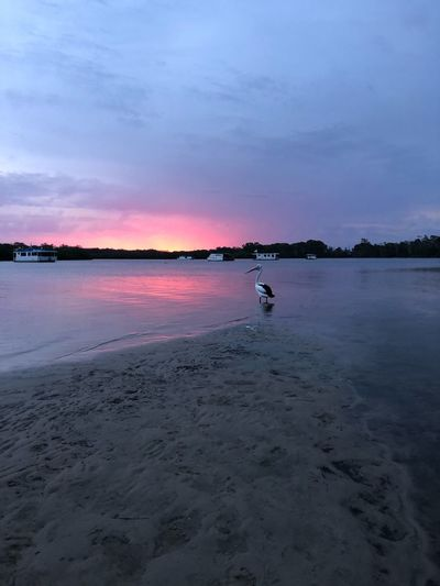 Sunset pelican Estuary Golden Beach Caloundra Sunset No People Pelican Water Nature Beauty In Nature Scenics Sunset Tranquility Sky Tranquil Scene Sand Outdoors