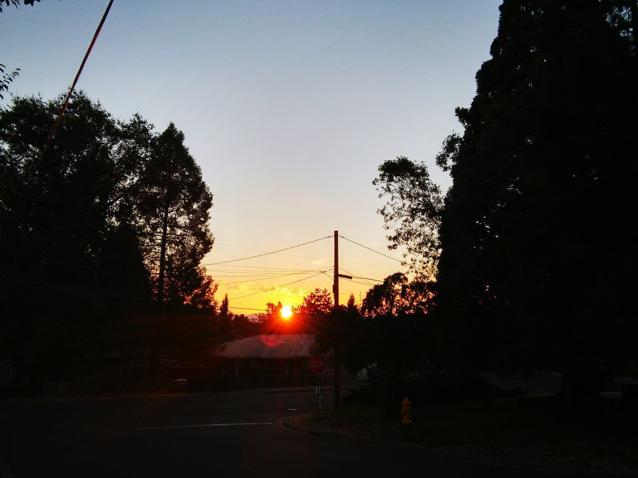 sunset, tree, silhouette, sun, sky, cable, no people, sunlight, nature, outdoors, growth, beauty in nature, electricity pylon, telephone line, day