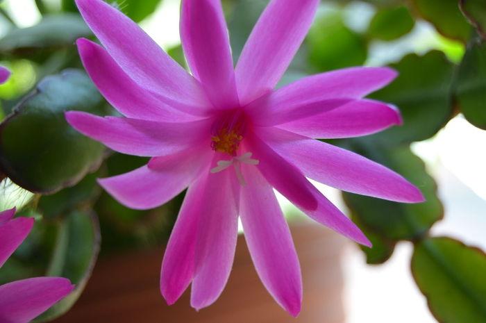 cactus flower Petal Blossom Close-up