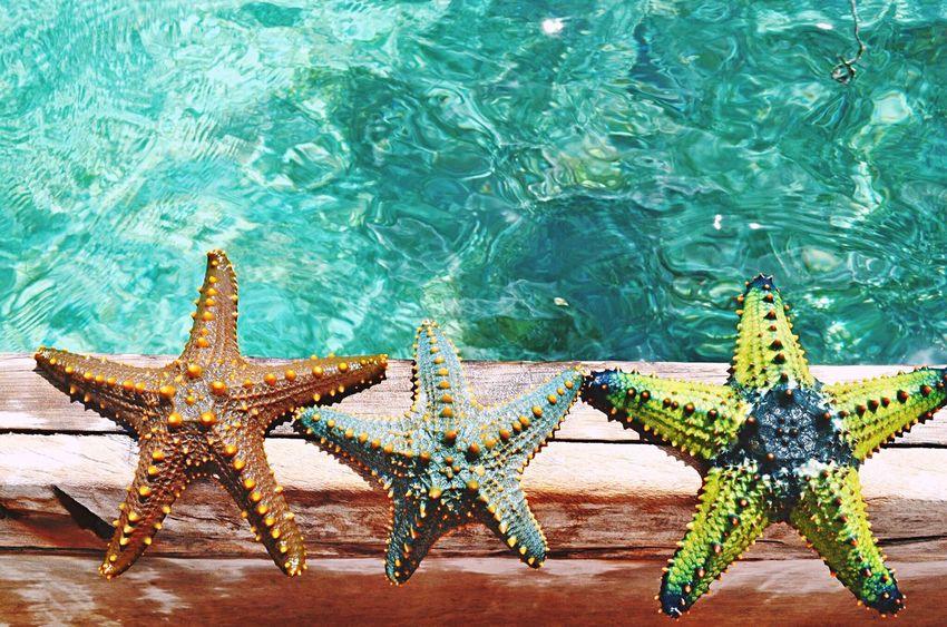 Stars Dreams Friends Family Zanzibar Zanzibar_Tanzania Africa Afrique Sea Swimming Swimingpool Travel Affinity Magic Nowords Paradise Paradise Beach Forever Beautiful Beach Beautiful Nature Beachphotography Myphoto Myplace SilviaPennazio