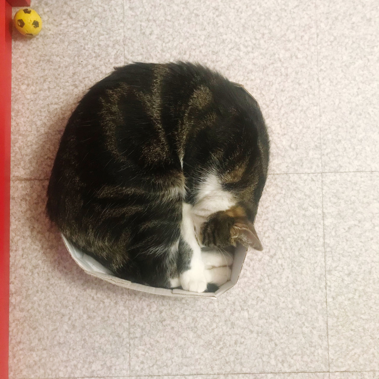 HIGH ANGLE VIEW OF CAT SLEEPING ON CARPET