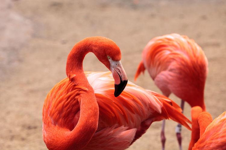 Close-up of birds on beach