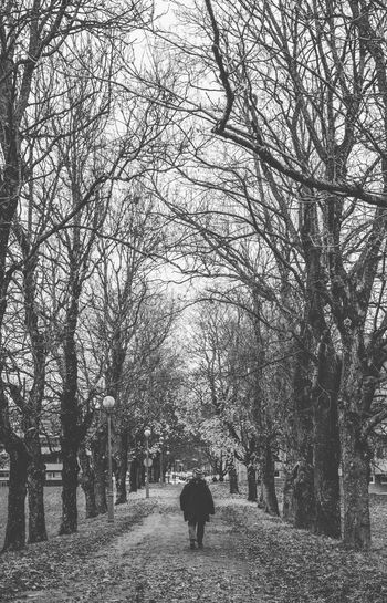 Winter in