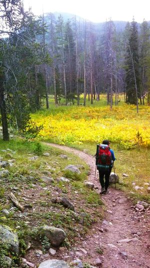 Backcountry Hiking Outdoors Nature EyeEm Nature Lover Mountains Backpacking Backpacker Uintamountains Hiking Trail