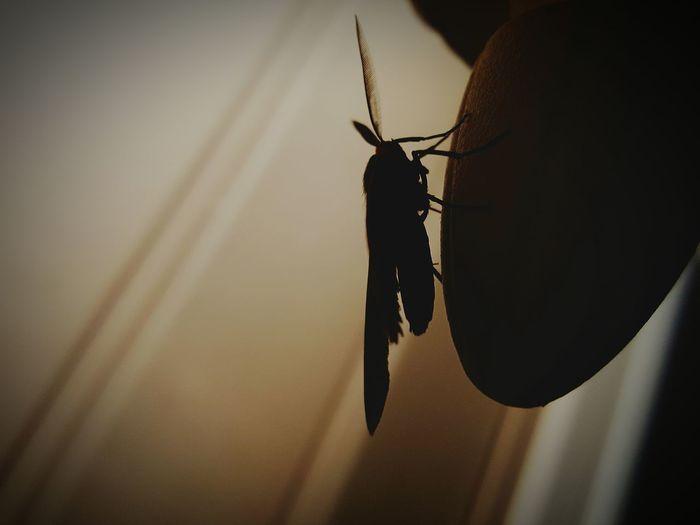 Shadows Nightimephotography Moth Michigan Mothernature