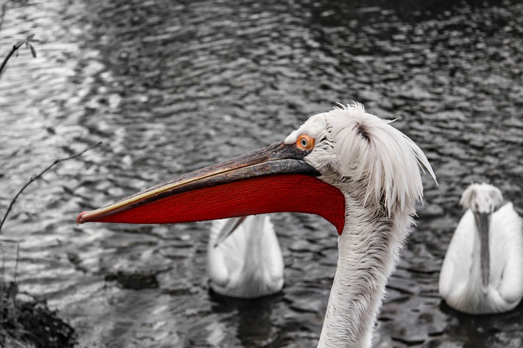 Bird Crane -